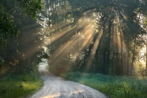 Path with sunbeams in strong fog leading to new direction in the forest